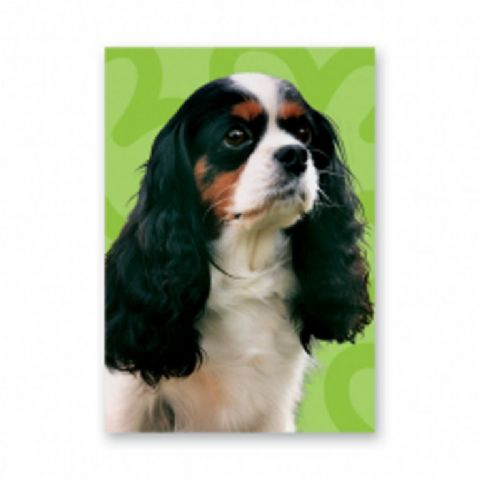 KING CHARLES CAVALIER  tri-colour greetings card green background